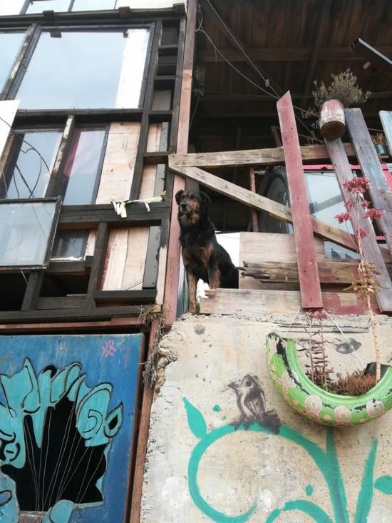 Balty, le chien de l'association qui guètte.