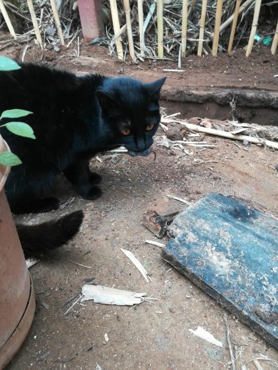 Des souris se sont faites attraper par Negra, le chat de l'association.