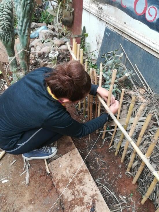 Deuxème étape, Honorine et Laura ont fait des brelages pour tenir les bambous !
