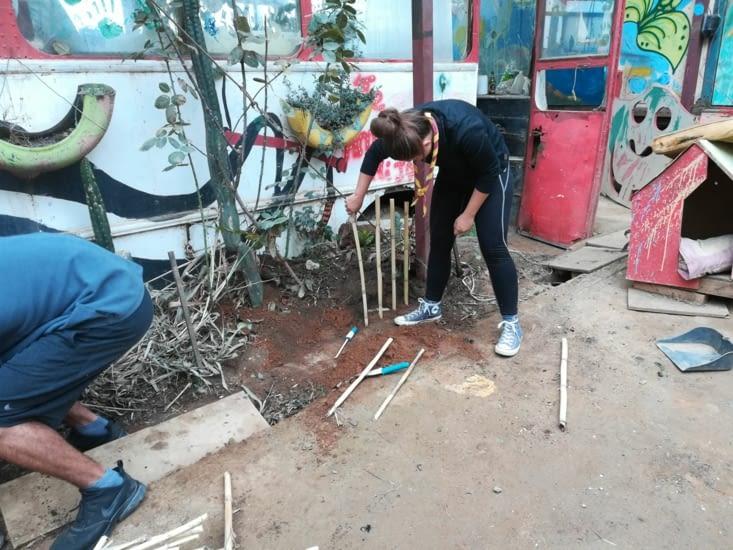 Une nouvelle barrière en bambou pour délimiter les plantations
