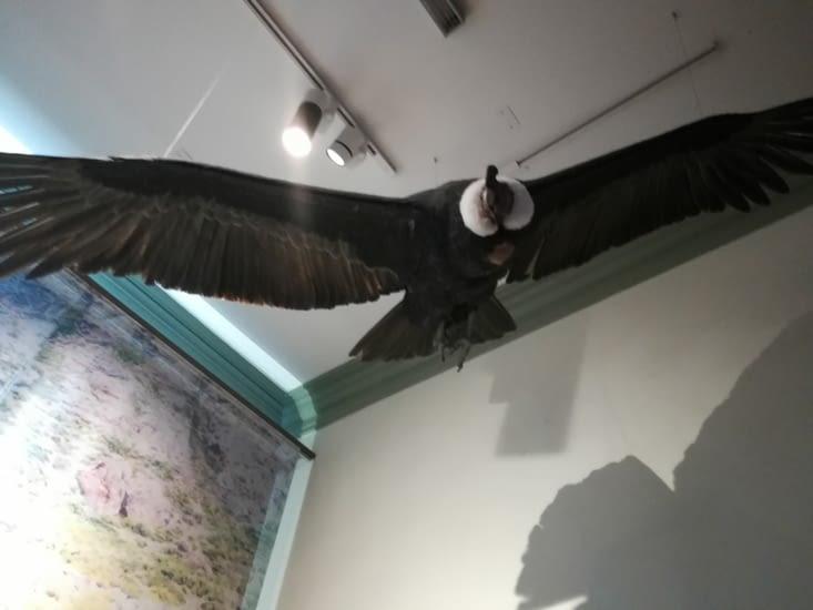 Musée d'histoire naturel