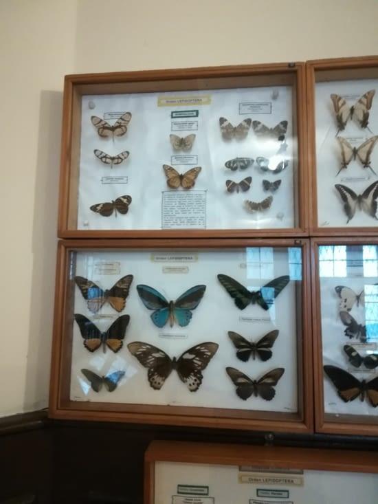 De jolies papillons...