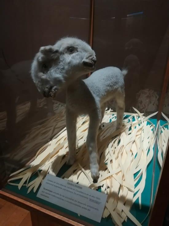Deformation du mouton