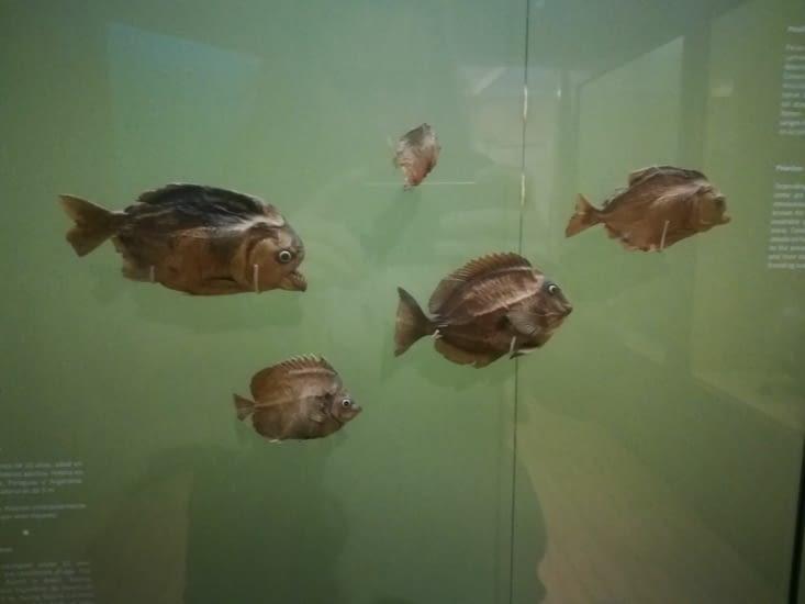 Des piranhas