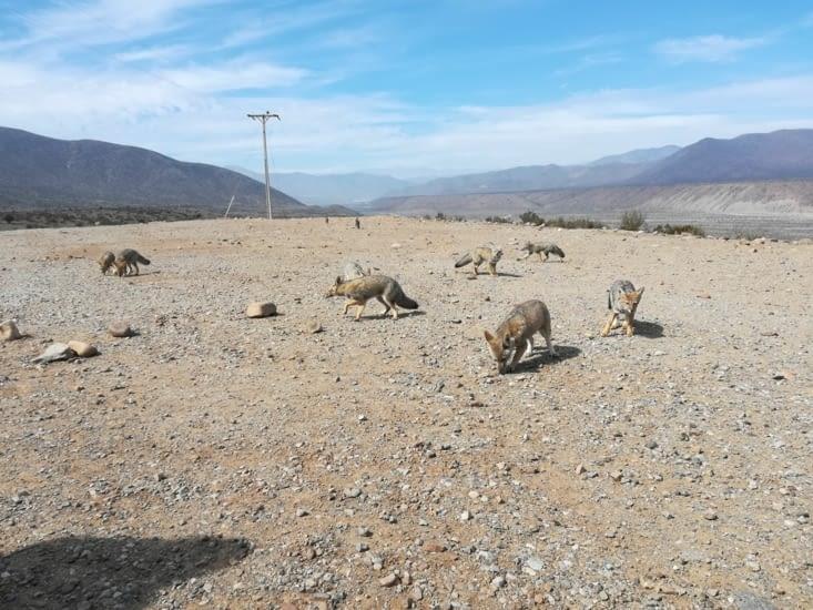 Quelques crakers nous permettent de les approcher... Ce sont des zorros.