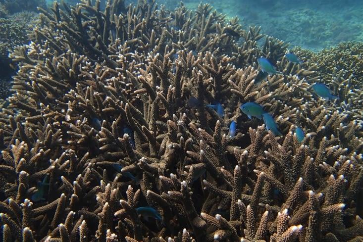 Pas mal ! De beaux coraux et des petits poissons colorés.
