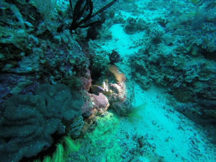 Pas de gros comme à Rangiroa mais ça grouille de vie et de coraux.