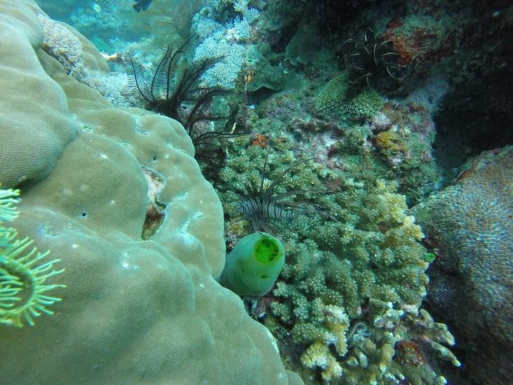 Un poisson scorpion. On a même pu en voir de plusieurs formes et couleurs.