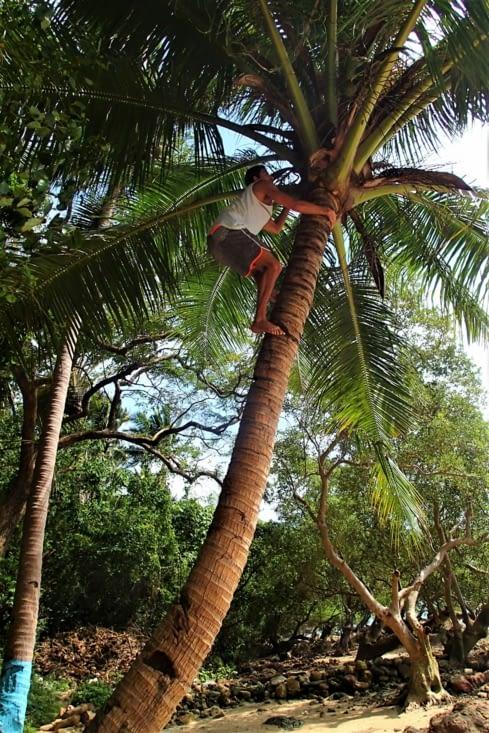 Et Guillaume a même pu s'entraîner au grimper de cocotier !