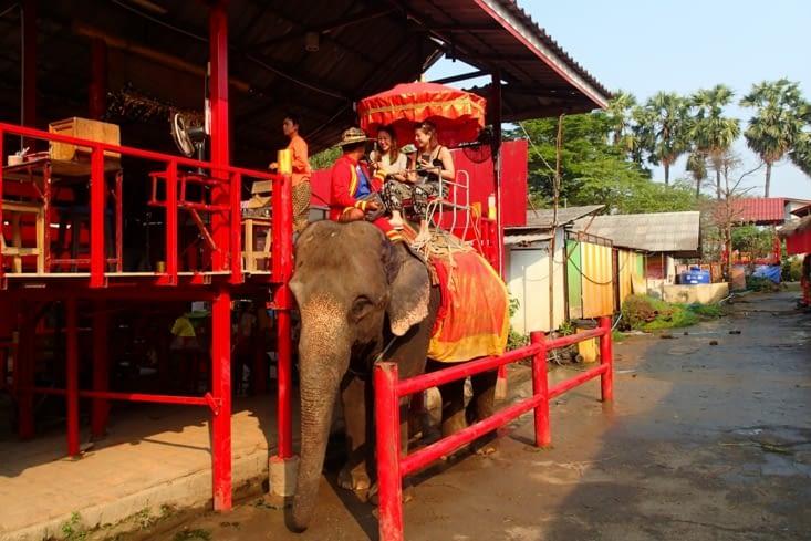 Le pire, c'est ça... Autour du site, il y a plein de balades à dos d'éléphants.