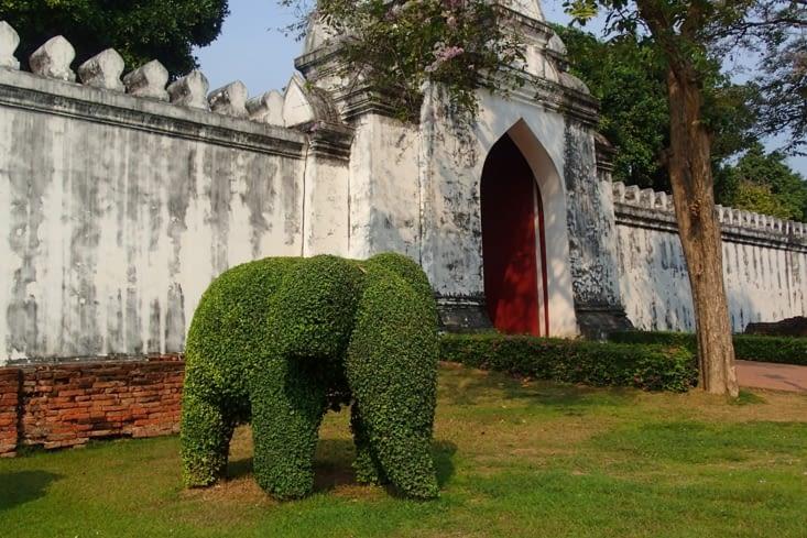 Trop mignon le petit éléphant arbuste !