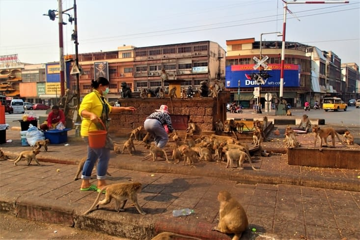 Changement de décor et de lieu. Nous voici à Lopburi une ville envahie de macaques !