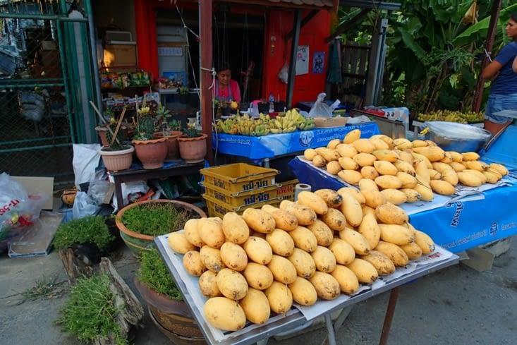On fait le plein de fruits locaux pour la route. De bonnes mangues bien fraîches ?