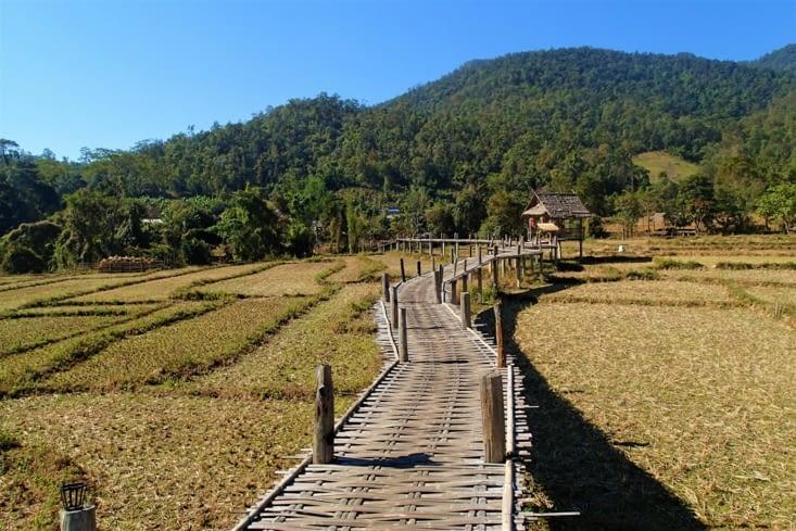 Voici le Bambou Bridge. Ce pont survole les rizières sur près de 500 m de long.