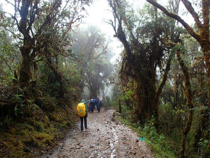 Descente de l'autre côté de la montagne. Un tout autre paysage. Bienvenu dans la jungle !