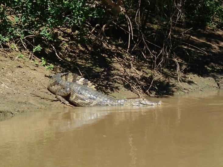 C'est simple sur chaque rive, c'est infesté de caïmans et d'alligators !