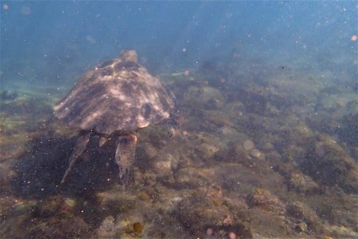 Pendant ce temps, je sympathise avec le milieu sous marin et cette immense tortue ?