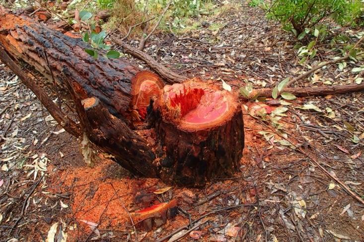 Du bois exotique. Trop beau ce rouge intense ! Pas du vieux bois qui grise comme chez nous