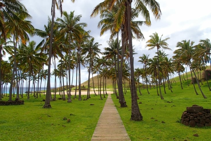 Anakena. C'est la plage paradisiaque de l'île avec sa palmeraie et ses moaï.