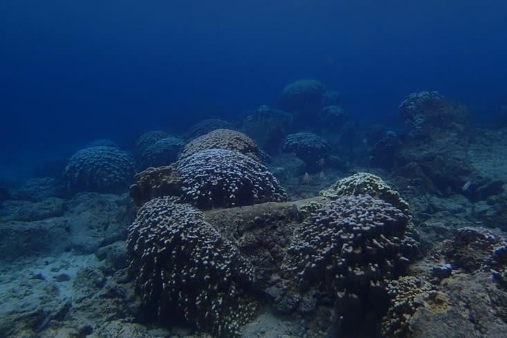 Ça c'est la vue sous l'eau. Première fois que je vois des coraux. Trop beau !