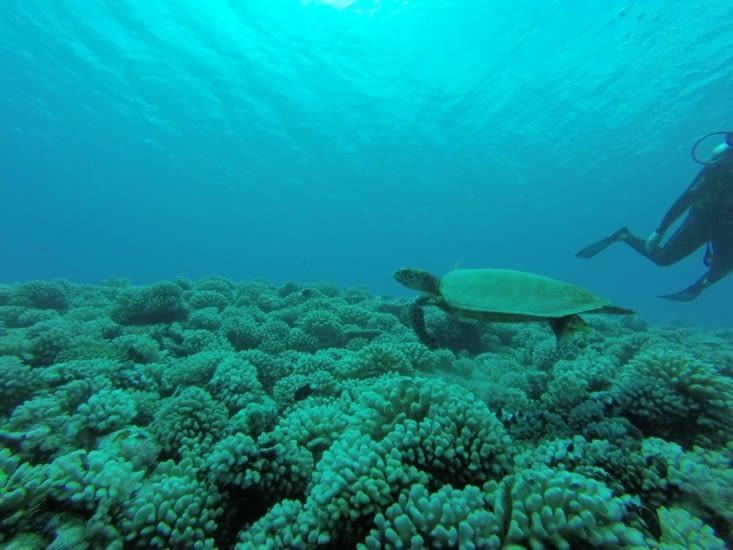 Pas de requin citron aujourd'hui malheureusement. Mais par contre pleins de tortues ?