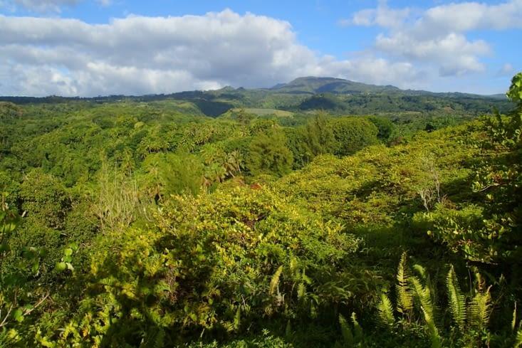 Un point de vue au dessus d'une vallée. Comme vous voyez c'est très vert.