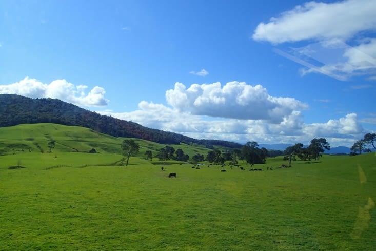 On reprend la route direction Matamata, sur les traces de Fredon, Sam et Bilbon...
