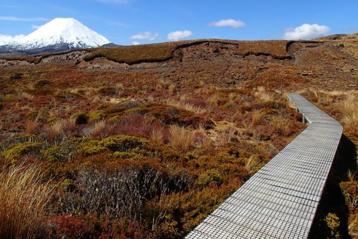Comme partout en NZ, il n'y a qu'un seul chemin et tout le reste est préservé. Top !