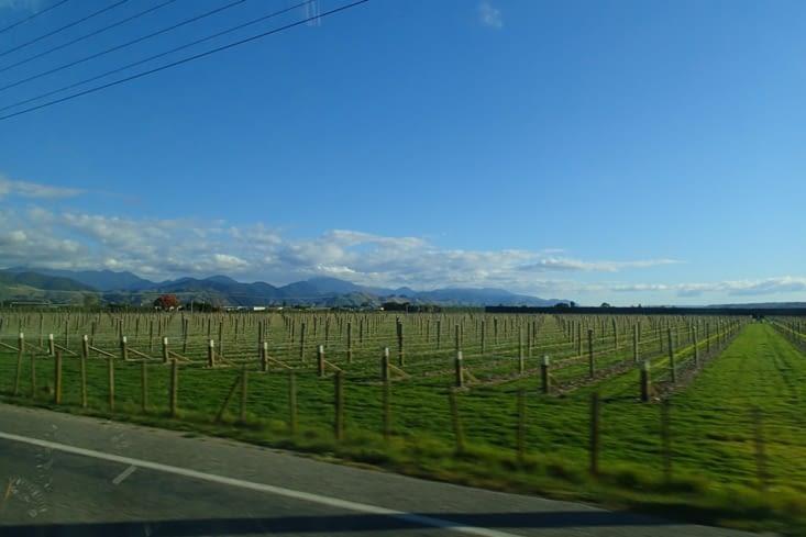 On poursuit la route à travers les nombreux vignobles de cette région.