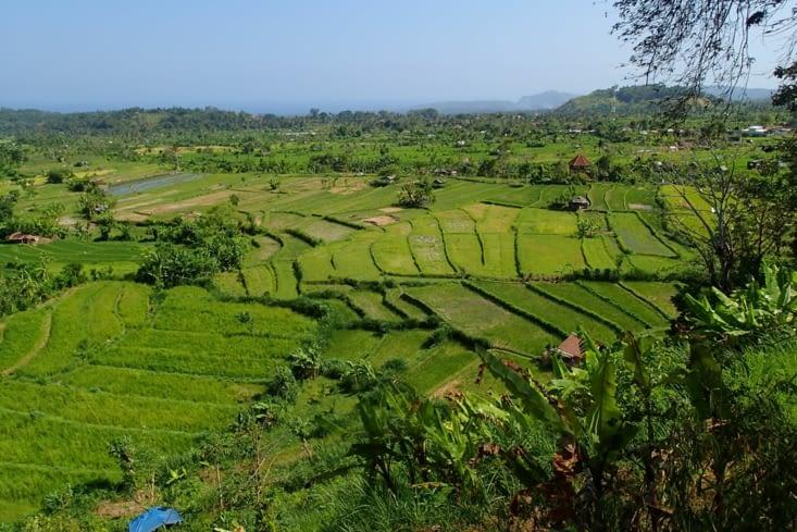 Voilà le paysage le plus répandu ici : les rizières en terrasse. Super beau !
