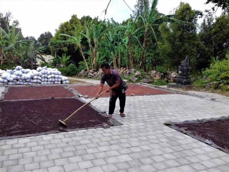 Et voilà des girofles. Bali en est le premier producteur au monde ! Ça sent trop bon !