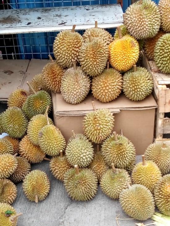 Voici le durian, un fruit qu'on voit partout ici. On en a bêtement acheté pour goûter...