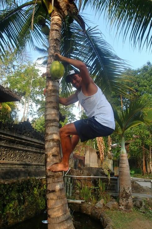 Allez !!!! Une noix de coco, une !!!! Dédicace à Pascal pour le grimpé de cocotier ?