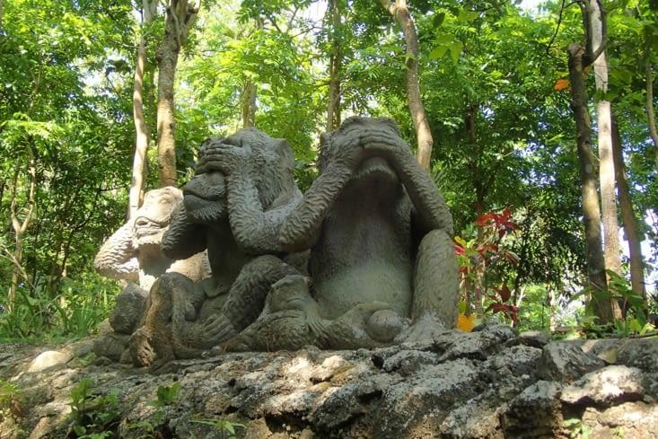 Nous voilà partis visiter la forêt des singes !