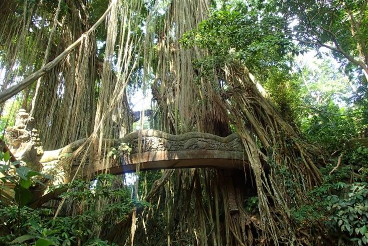 Un petit pont au milieu des lianes. Où est Mowgli ?
