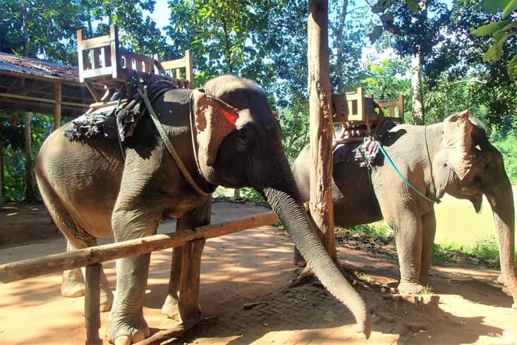 C'est malheureusement aussi un spot de ridding à dos d'éléphant...