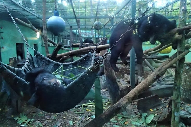 Et aussi un petit centre de protection des ours. Eux aussi victimes de la déforestation...