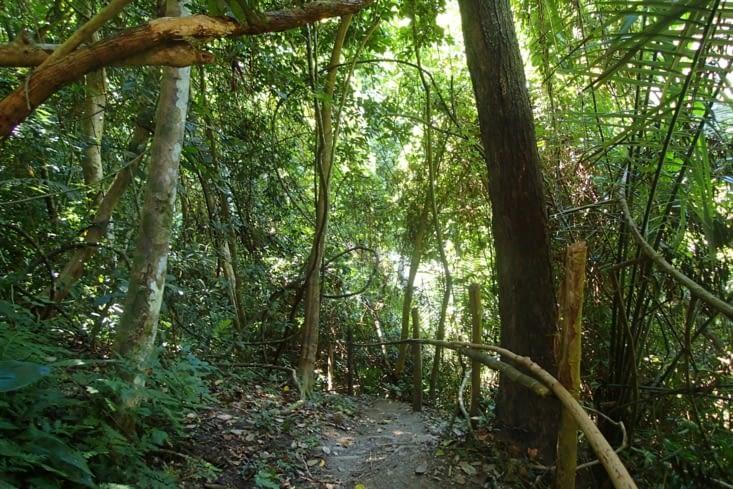 On peut même faire une balade dans la jungle en longeant le cours d'eau.