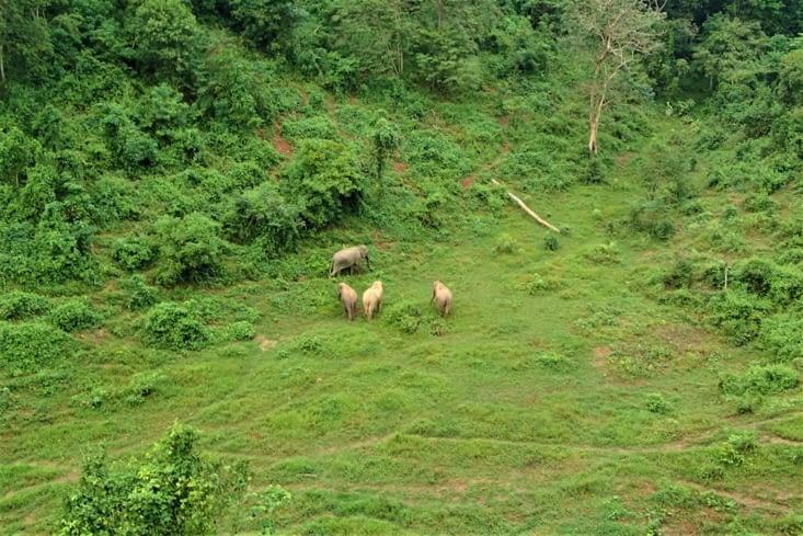 Cette zone permet aux éléphants de créer des liens et de former un groupe.