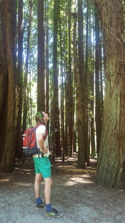 Balade dans les séquoias