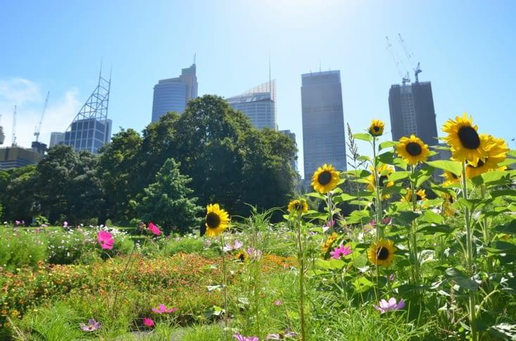 Les fleurs du Royal Botanic Garden avec en fond le CBD