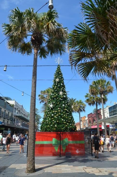 Le contraste sapin de Noël 🎄et cocotier 🌴  ! 😁