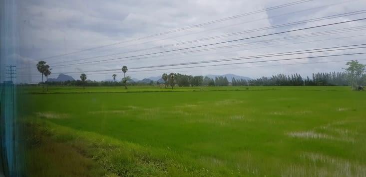 Paysage traversé durant notre trajet en train : ici des rizières
