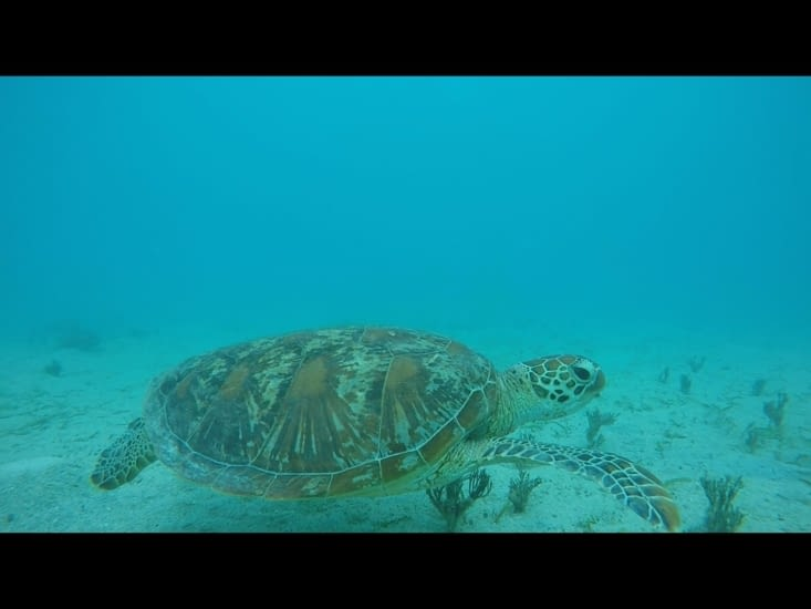 Encore une tortue... on ne s'en lasse pas !
