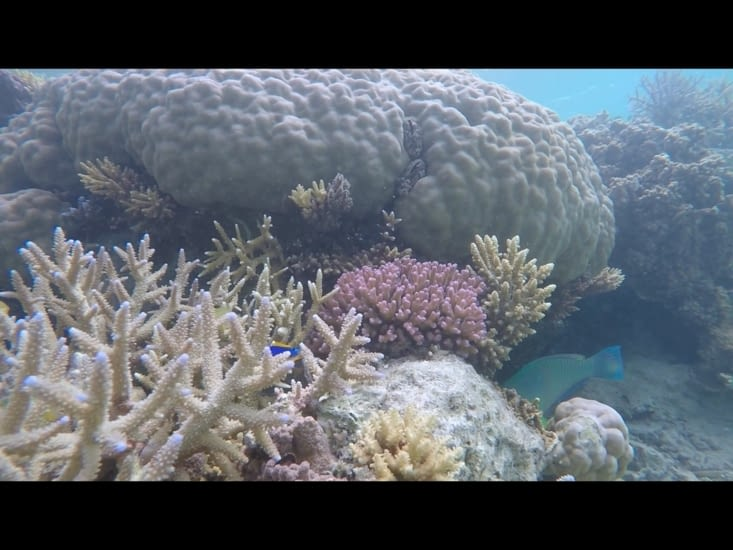Quelques coraux