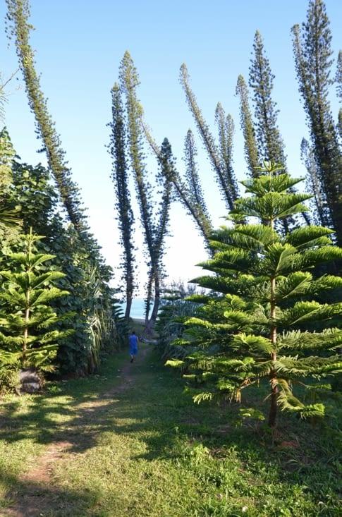 La végétation lorsque nous accédons à la Baie des Tortues