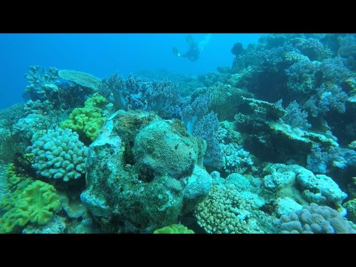 Une vue des fonds marins