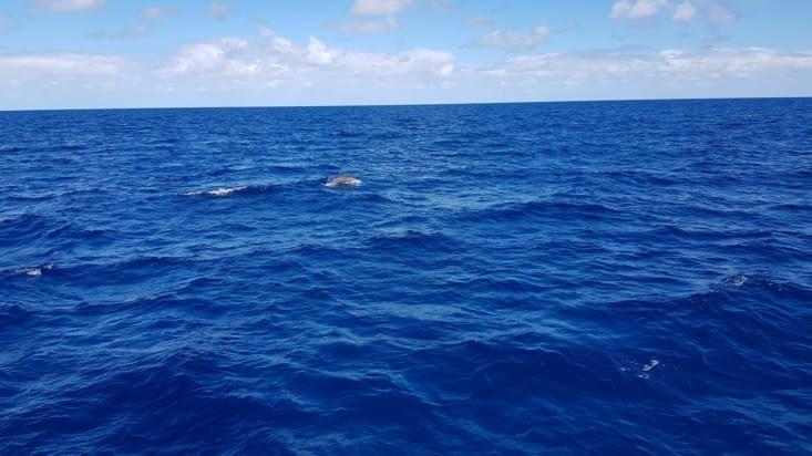 Un des dauphins du petit groupe qui s'est approché de nous