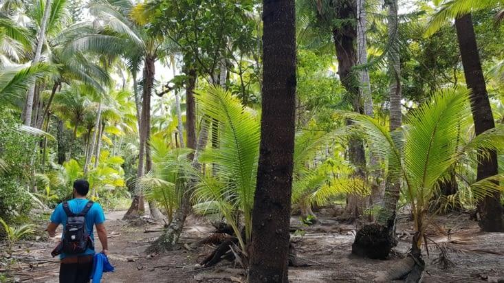 La jungle pour accéder à la rivière
