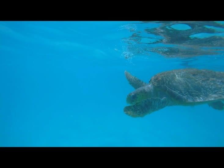 La tortue «star» du coin